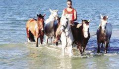 «كورونا» تمنع «ركوب الخيل» على شواطئ الغردقة بعد غياب السياح