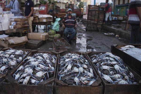 تراجع أسعار الأسماك في سوق العبور خلال أسبوع