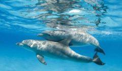 حظر الشباك العائمة لحماية الدلافين من الانقراض في نيوزيلندا