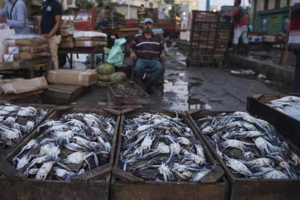 تراجع البلطي وارتفاع المكرونة.. أسعار الأسماك في سوق العبور اليوم