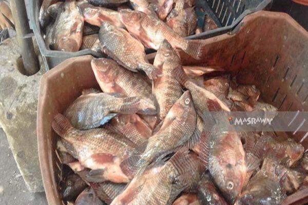 تعرف على أسعار السمك والمأكولات البحرية اليوم السبت