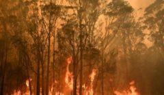 زيادة عدد الحرائق في منطقة الأمازون بالبرازيل