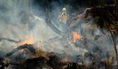 اندلاع حرائق في غابات تونس بسبب ارتفاع درجات الحرارة